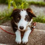 Traveling With Your Dog: The Complete Guide to Adventures With Fido